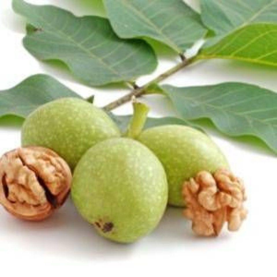 Tratamiento Natural para Aumentar los Niveles de Tiroxina
